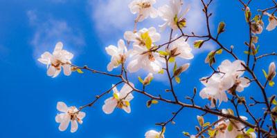 fleurs à Paris printemps