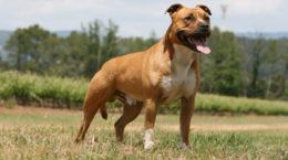 Quelle assurance pour un chien catégorie 2