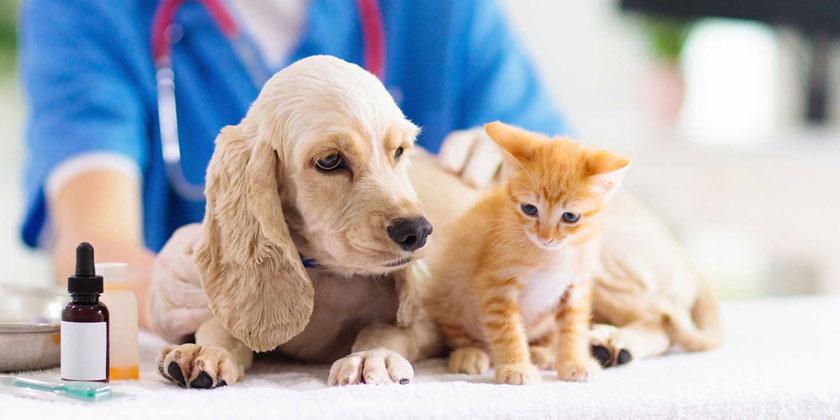 assistant vétérinaire