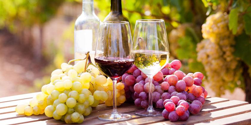 Acheter des vins naturels et vivants